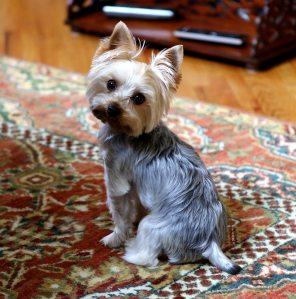 adorable-animal-canine-533132
